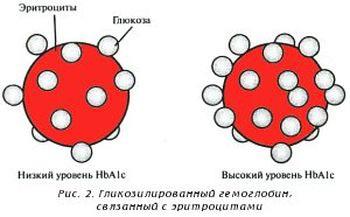Что такое гликированный гемоглобин?