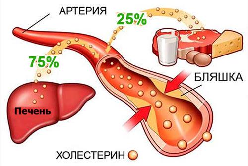 как образуется холестирин