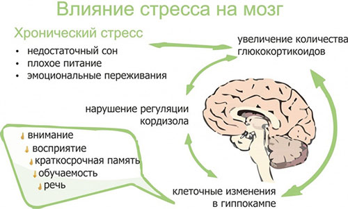 Значение кортизола для организма и к чему приводит нарушение его регуляции