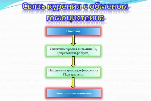 Влияние курения на обмен гомоцистеин в организме