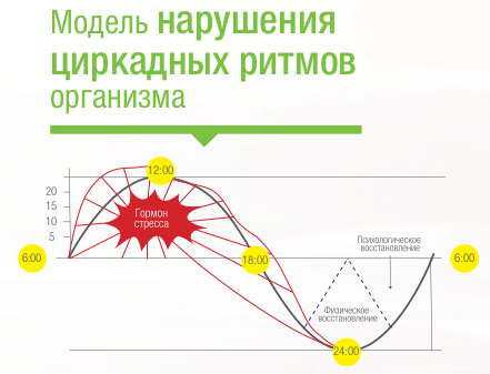 Модель нарушения циркадных ритмов организма