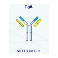 Иммуноглобулин А (IgA) - показатель гуморального иммунитета.