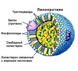 липопротеины - структура