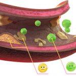холестирин в крови