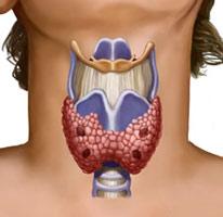 Причины и последствия пониженного уровня тиреотропного гормона