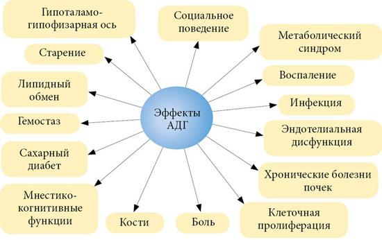 Что регулирует в организме антидиуретический гормон (вазопрессин)