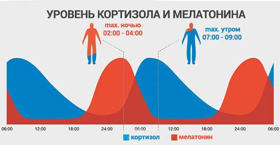 В какое время суток уровень кортизола в крови максимальный