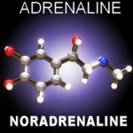 За что отвечает гормон адреналин и норадреналин?