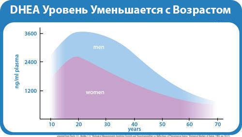 Как изменятеся нормальные показатели дегидроэпиандростерона с возрастом у женщин и мужчин