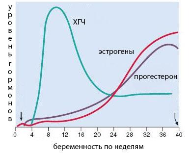 Повышенный ХГЧ при беременности на разных сроках