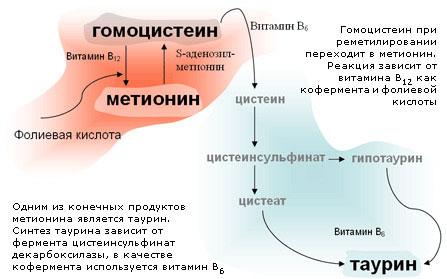 Метаболизм гомоцистеина