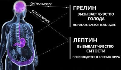 Гормоны голода и сытости грелин и лептин