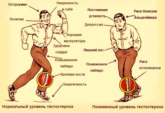 Болезни, связанные с нарушением уровня тестостерона