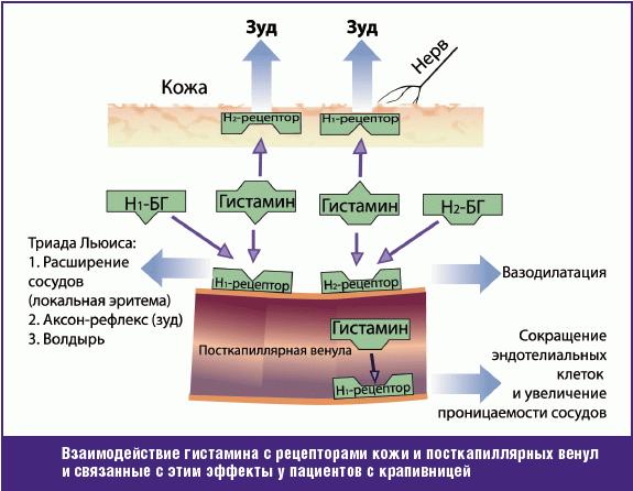 Механизм действия гистамина и его эффекты