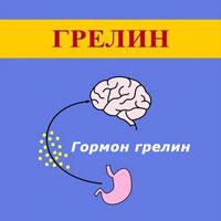 Что такое грелин и его функции в организме