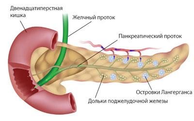 При диагностике онкологии органов ЖКТ назначается анализ на маркер СА 19-9