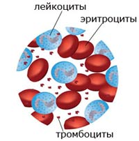 лейкоциты в крови фото