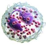 Эозинофилы в крови, что это значит?