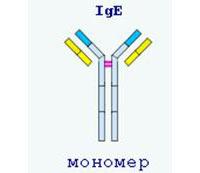 Что означает и показывает иммуноглобулин е