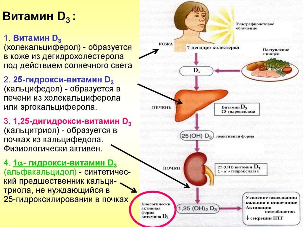 Для чего нужен витамин Д и как он поступает в организм человека