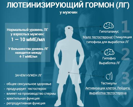 Лютеинизирующий гормон поддерживает нормальную деятельность половой системы у мужчин