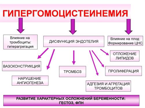 На что влияет гипергомоцистеинемия