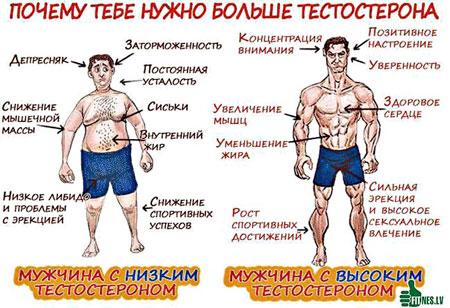К чему приводит низкий или высокий тестостерон