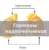 Надпочечники: какие гормоны вырабатываются в коре, заболевания и лечение железы