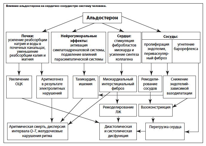 Фукнкции и влияние на организм альдостерона
