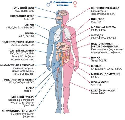 Какие онкомаркеры проводях при локализации опухоли в различных органах